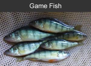 Gollon bait and fish farm dodgeville wi entire midwest for Fish farm missouri